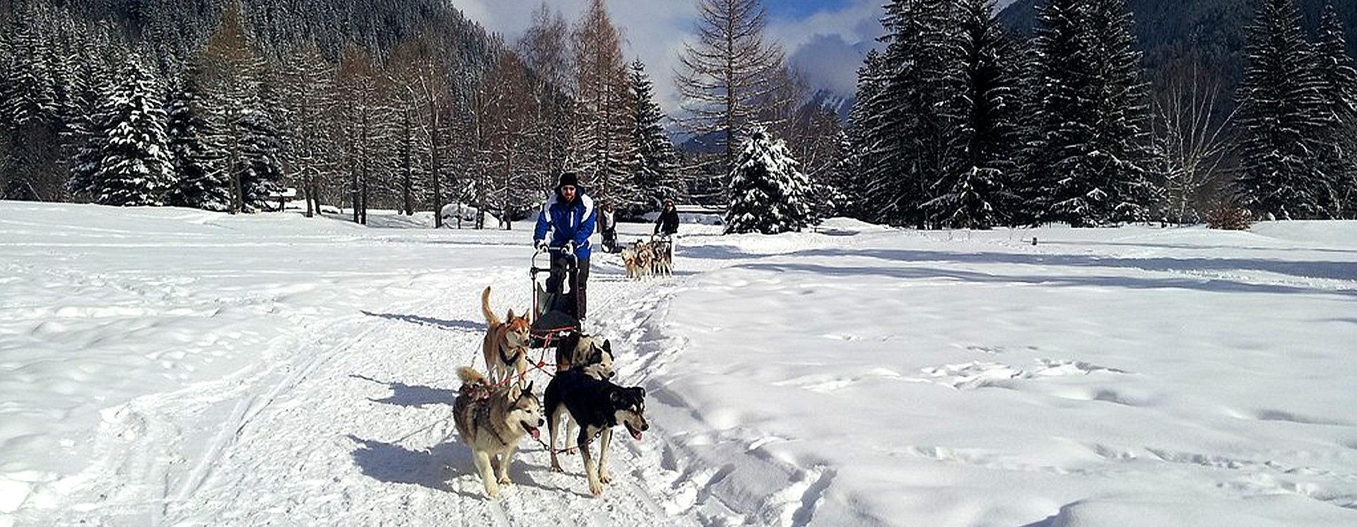 Dog Sleigh Rides & Snowshoe Hike